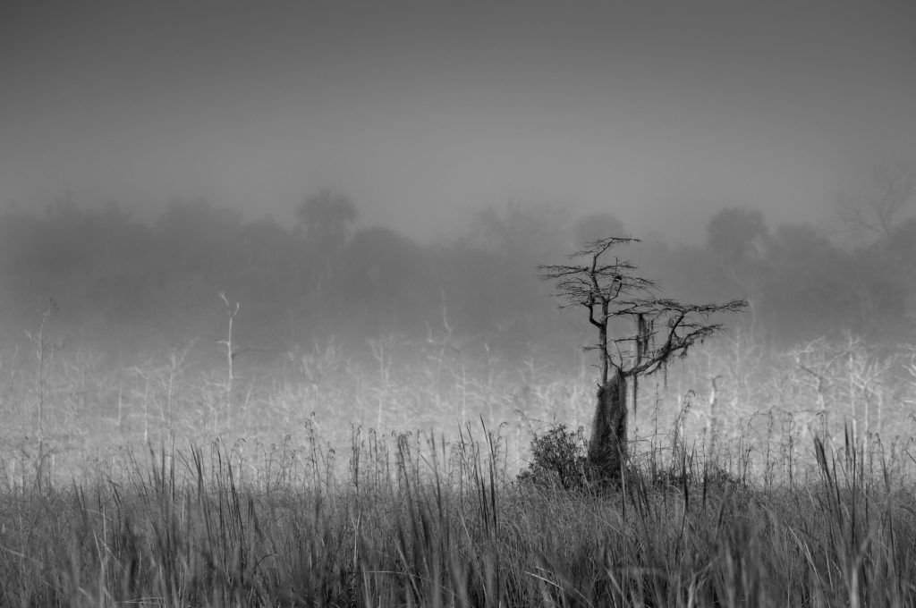 "BLACK & WHITE CATEGORY WINNER ""Beyond the Grass"" Darrell Davis"