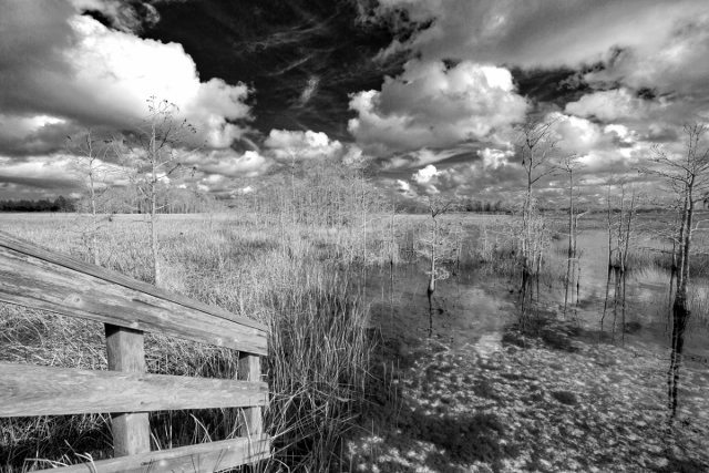 """Wetlands at Grassy Waters Preserve"" Photo by Michael Stebel"