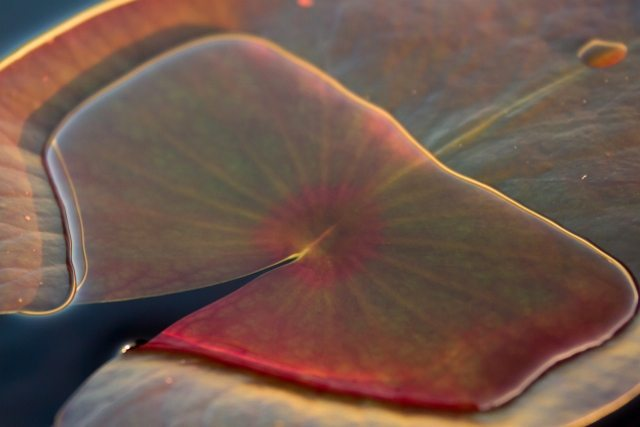 """Lily Pad Pool"" Photo by Greg Matthews"