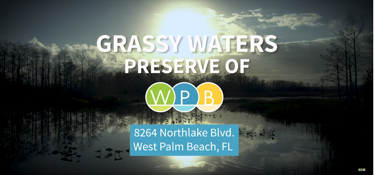 Grassy Waters Preserve: A Link to Our Past, Protecting Our Future